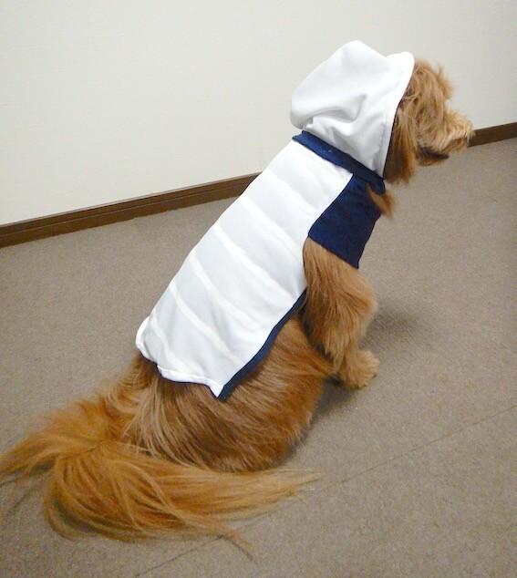 手作りの服を着る犬