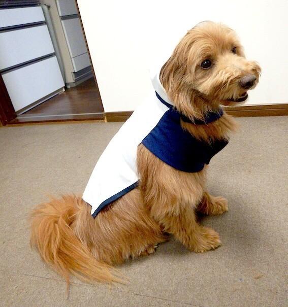手作りの服を着せられて笑顔の犬
