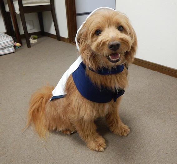 手作りの服を着せられてる犬