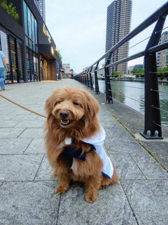 オシャレな街にいる犬
