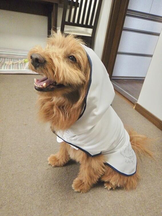 手作りマントを着る犬