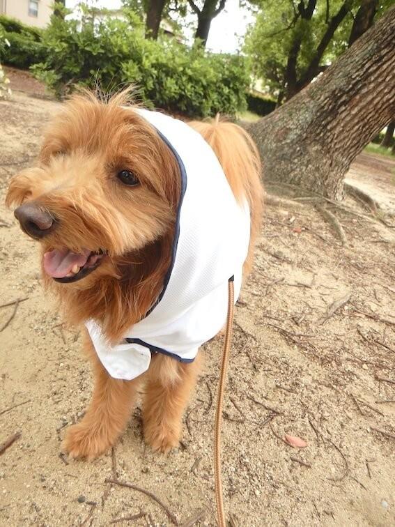 遮熱マントを着た犬