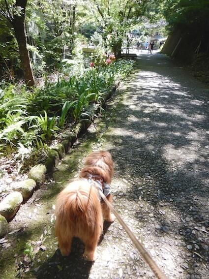 山道を歩く犬