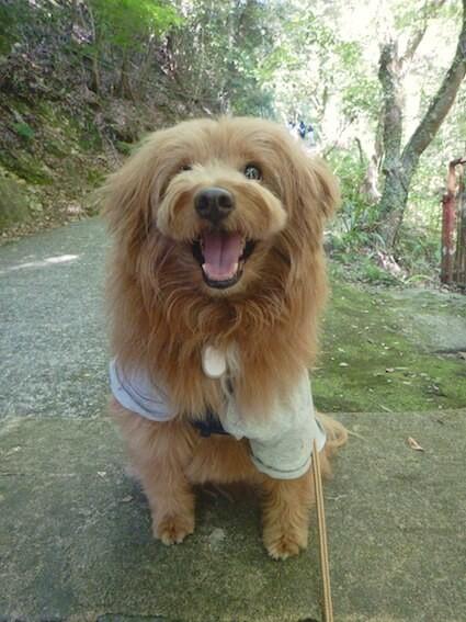 ニコニコしている犬の写真