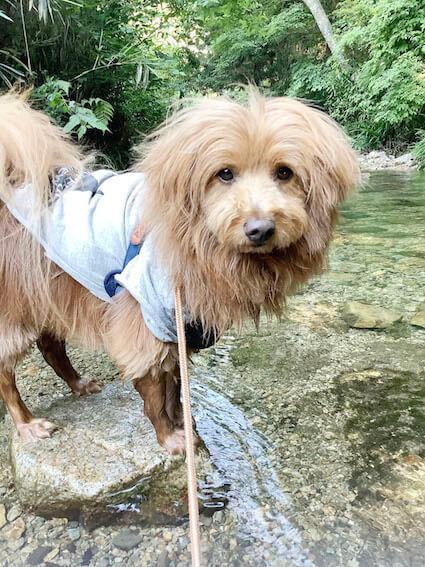 むっとしている犬の写真