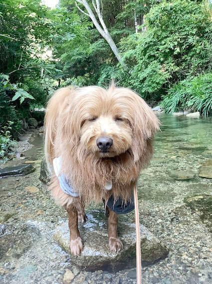 嫌そうに水に入る犬の写真