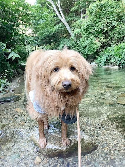 怒ってる犬の写真