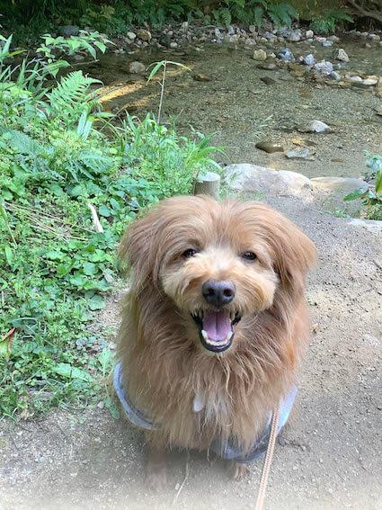 川のそばで笑顔の犬