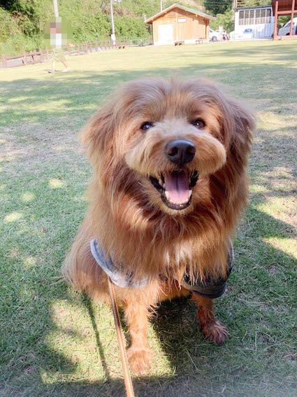 芝生の上で笑顔の犬