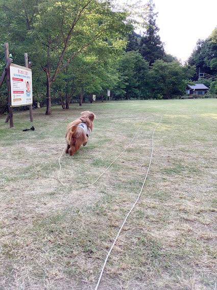 ボールを追いかけて走る犬