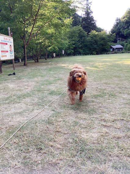 ボールをくわえて帰ってくる犬