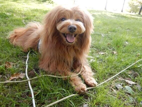 笑顔で座る犬
