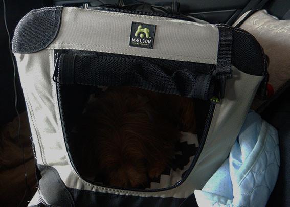 クレートの中で眠る犬