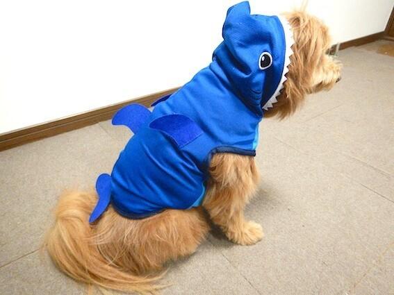 DAISOのサメのペット服を着せられている犬