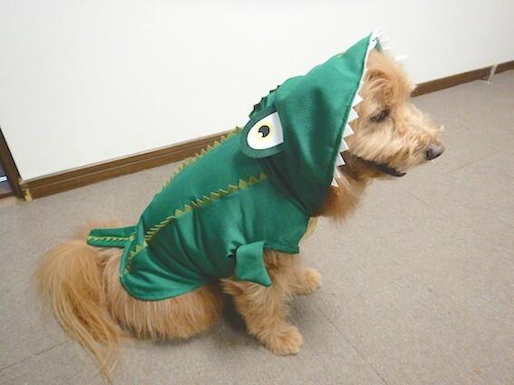 ダイソーペット服ワニを着る犬