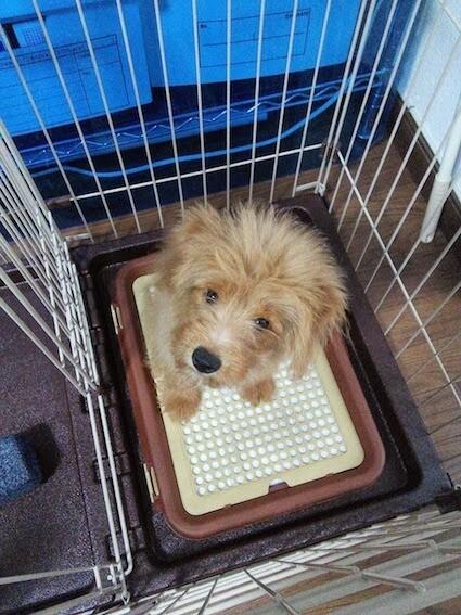 トイレの上に座る犬