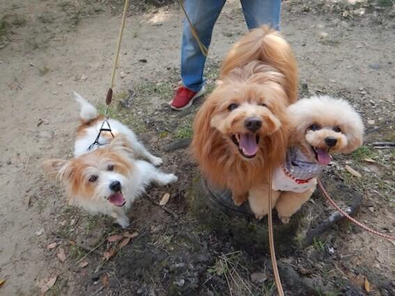犬たちが切り株に乗っている写真