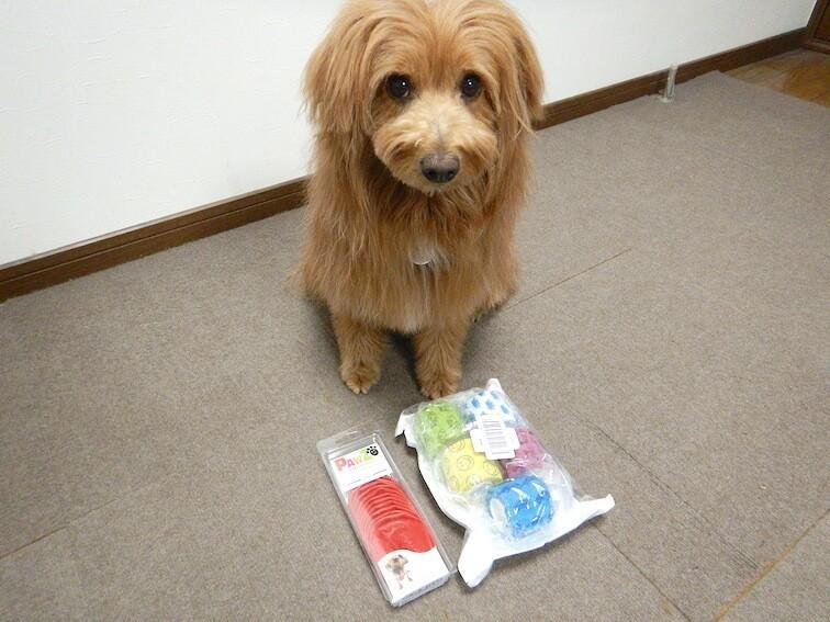 川遊びのセットと犬