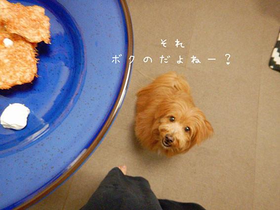 犬のおやつを早くほしい犬