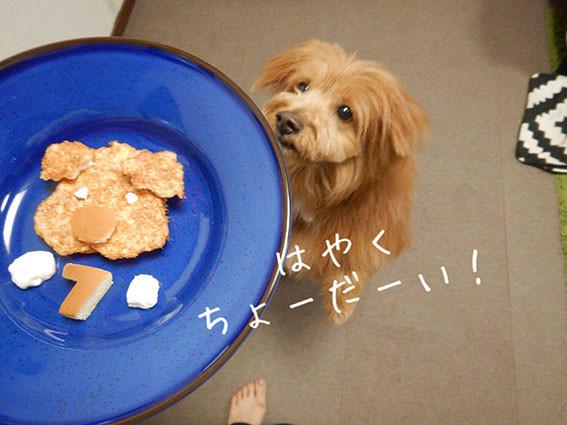 犬用おやつをワクワク待つ犬