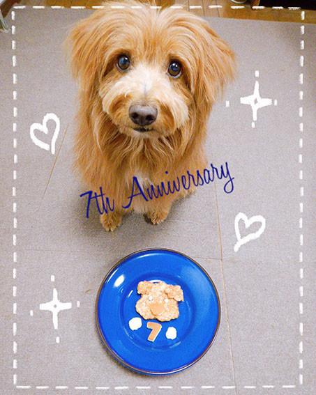 記念日スイーツを食べる犬