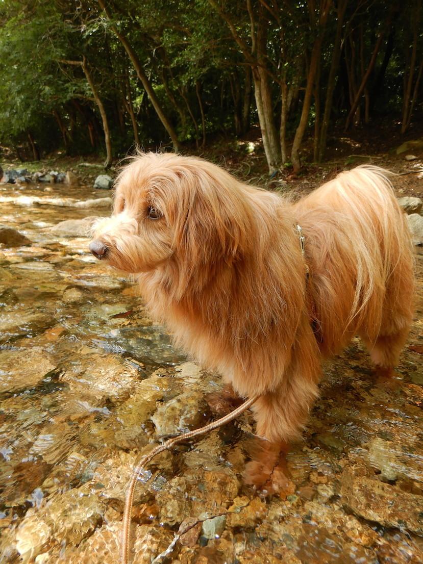 きれいな川に立つ犬