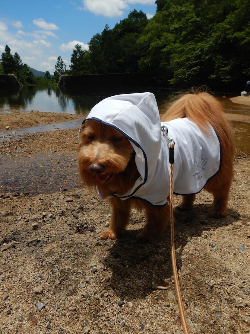 遮熱効果のあるマントを着た犬