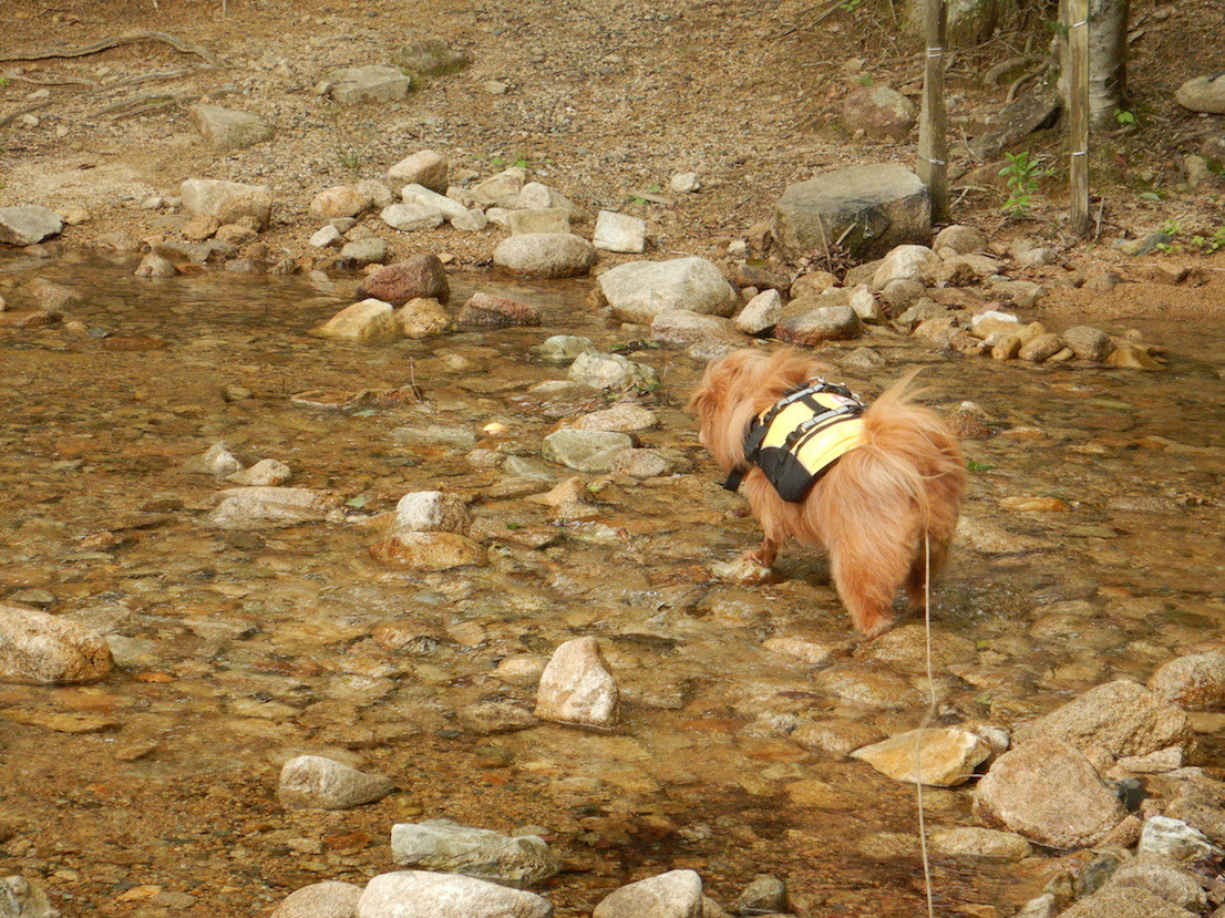 川の中にボールを取りに行く犬