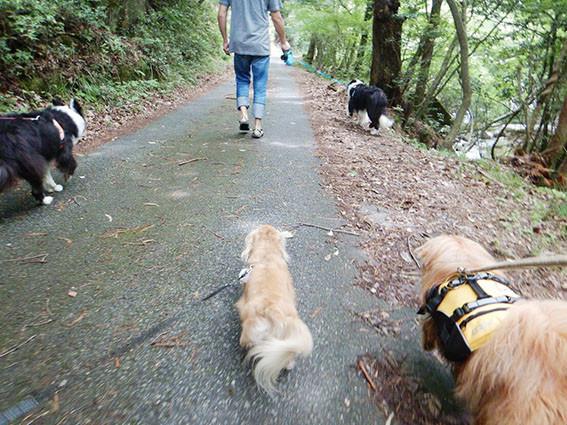 山道を歩く犬たち