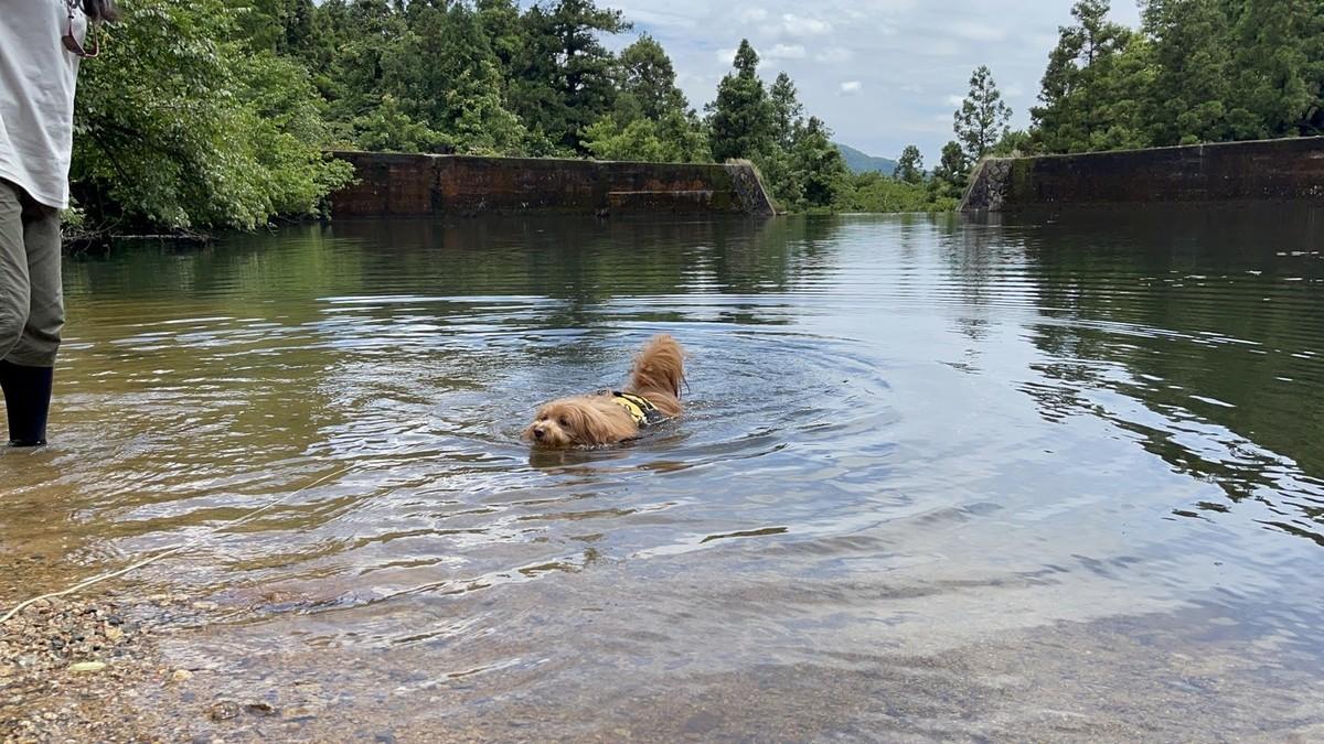 救命胴衣を付けて泳ぐ犬