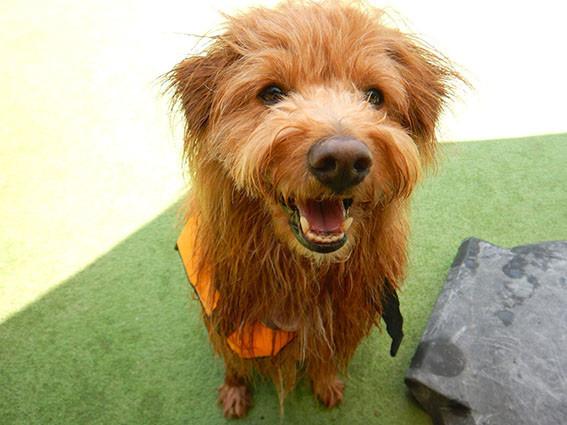 濡れて笑顔の犬
