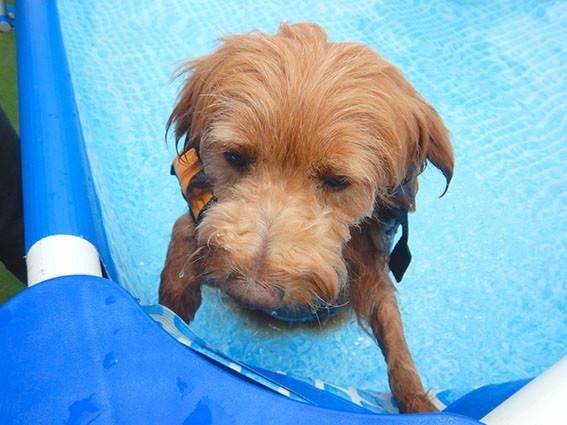 プールで遊ぶのを嫌がる犬
