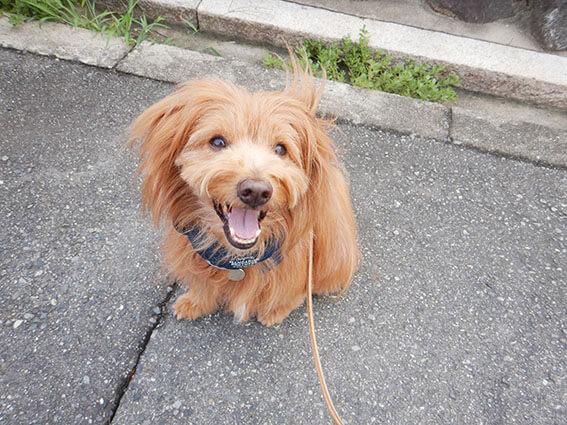笑顔でストライキする犬