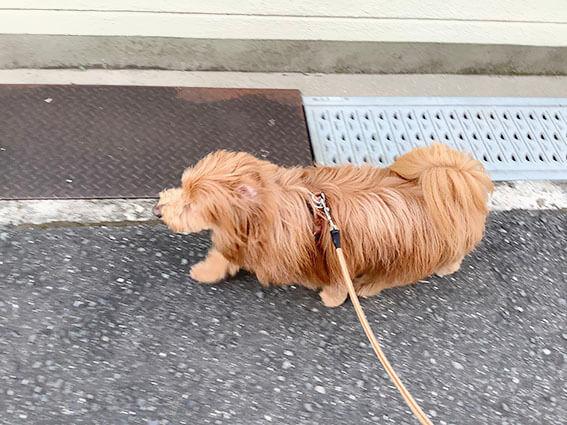 早く歩く犬