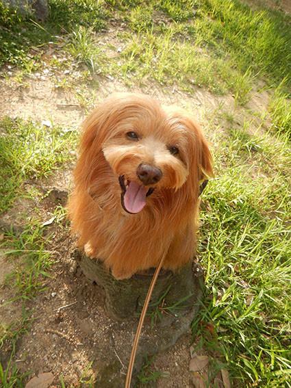 笑顔で切り株に乗る犬