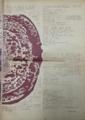 40068年6月20日(発行日)『部族 / THE TRIBE』vol.2, no.2(p.23)
