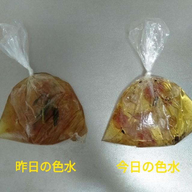f:id:chan-tamachang:20210525145947j:image