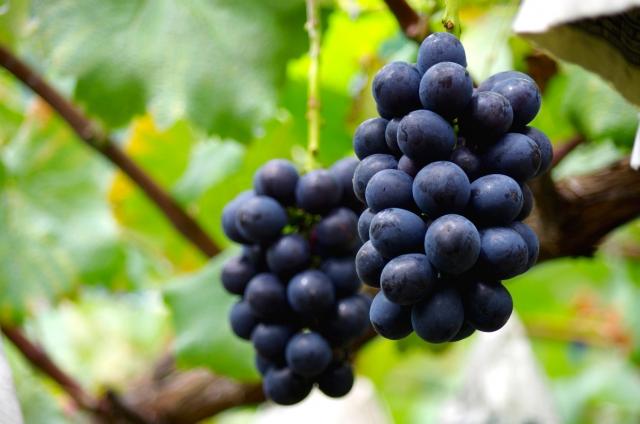 まるき葡萄酒の産地|theDANN media