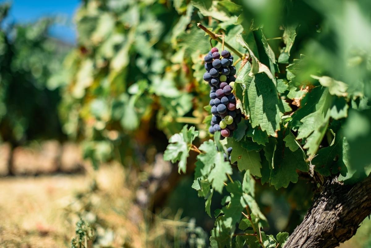 エシェゾーワインの産地|theDANN media