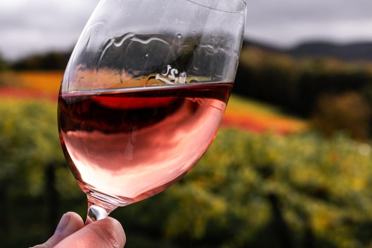 エシェゾーワインとは?味わいや香り、歴史について徹底解説!|theDANN media