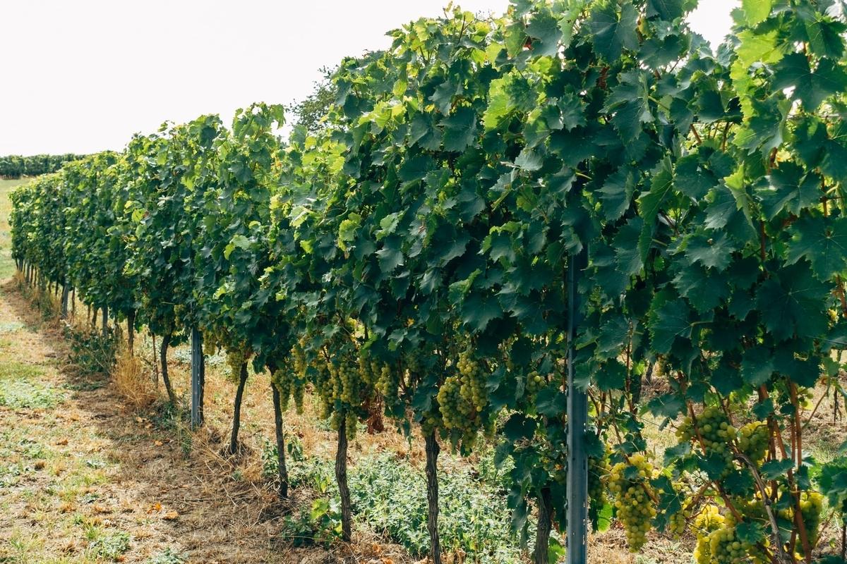 ナチュールワインの産地|theDANN media