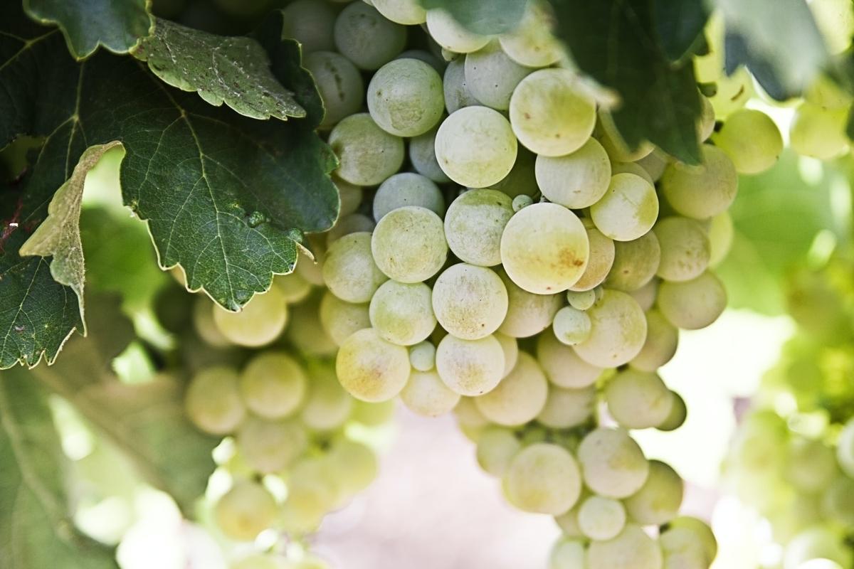 シャブリワインの産地|theDANN media