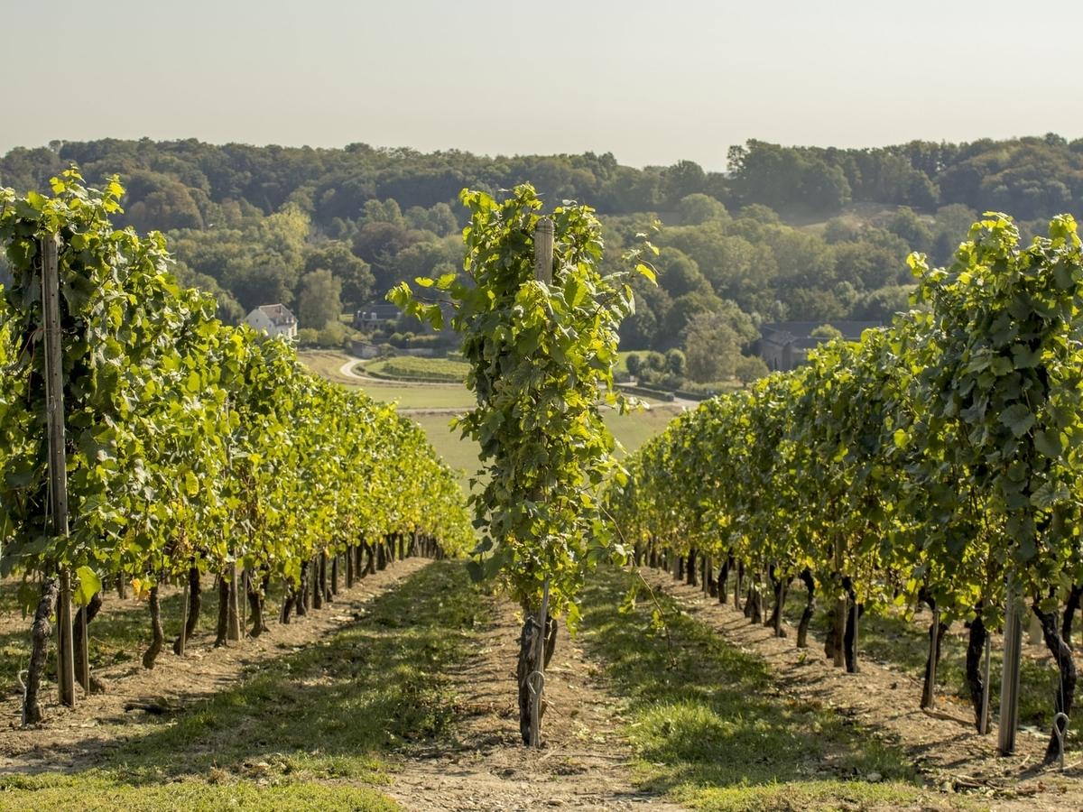 メルロー・ワインの産地|theDANN media