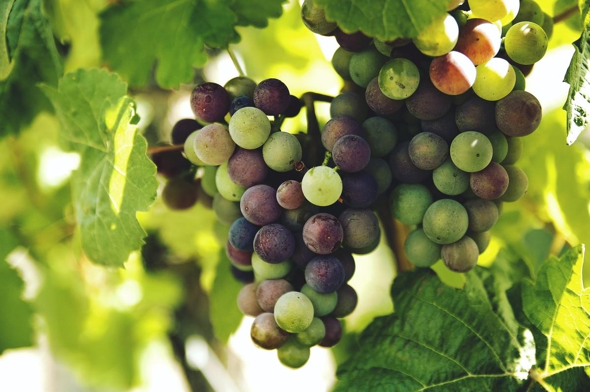 甘口ワインの原料|theDANN media
