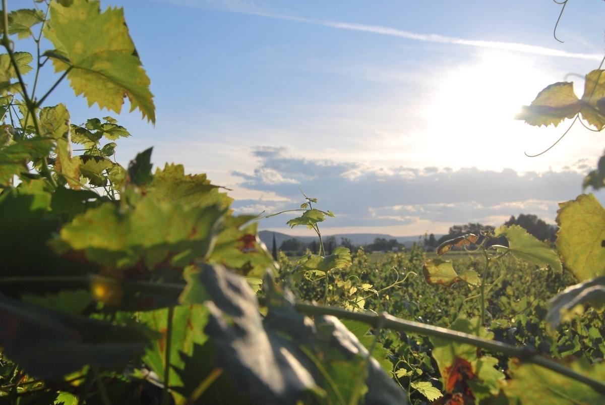 カーニヴォの産地|theDANN media