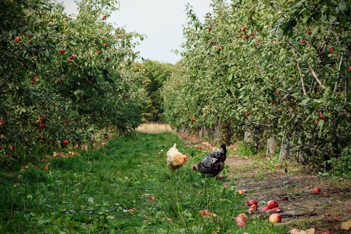 りんごワインの産地|theDANN media