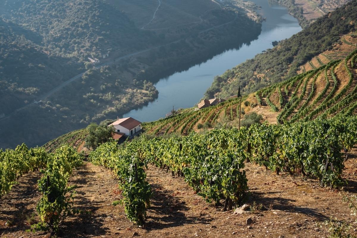 安心院ワインの産地|theDANN media