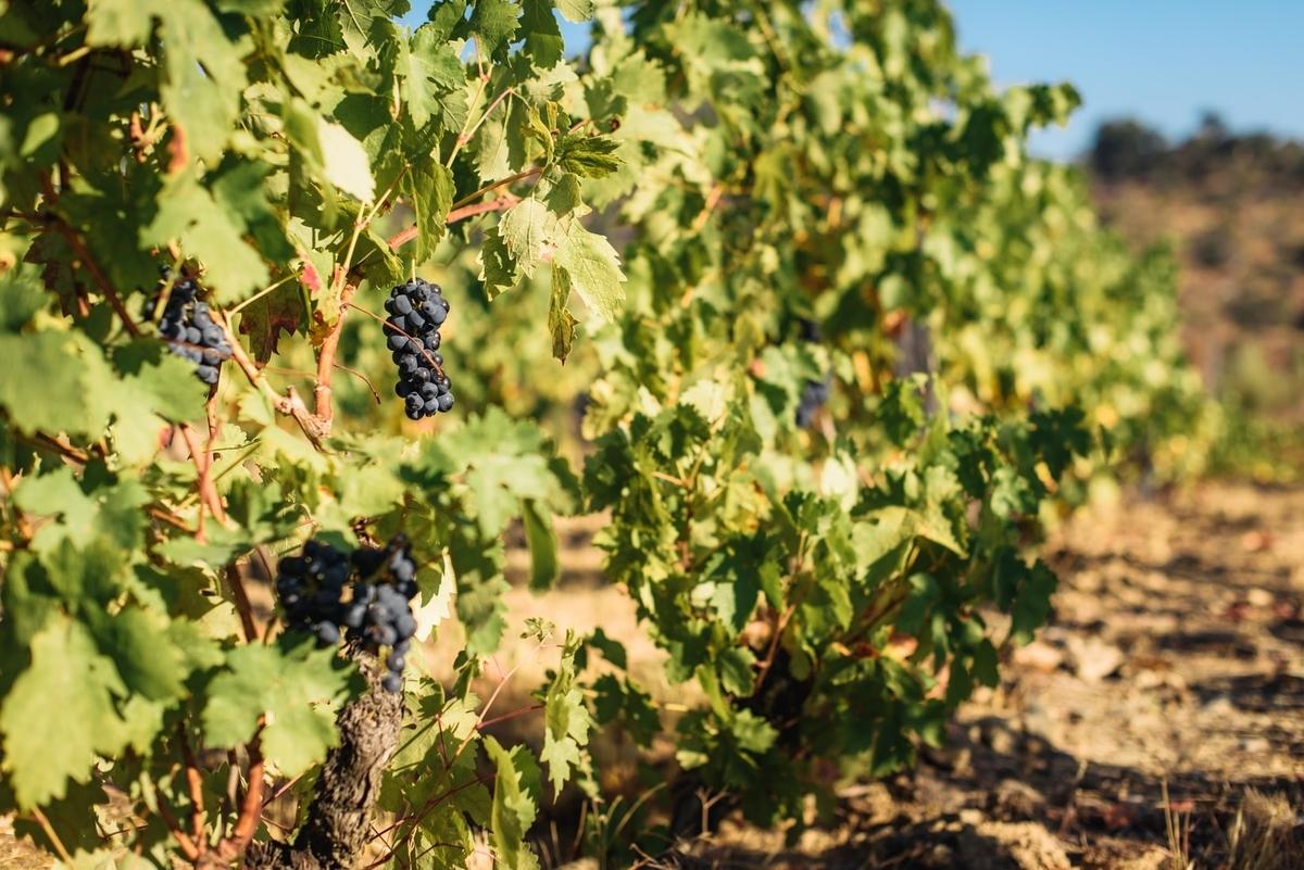 自然派ワインの産地|theDANN media