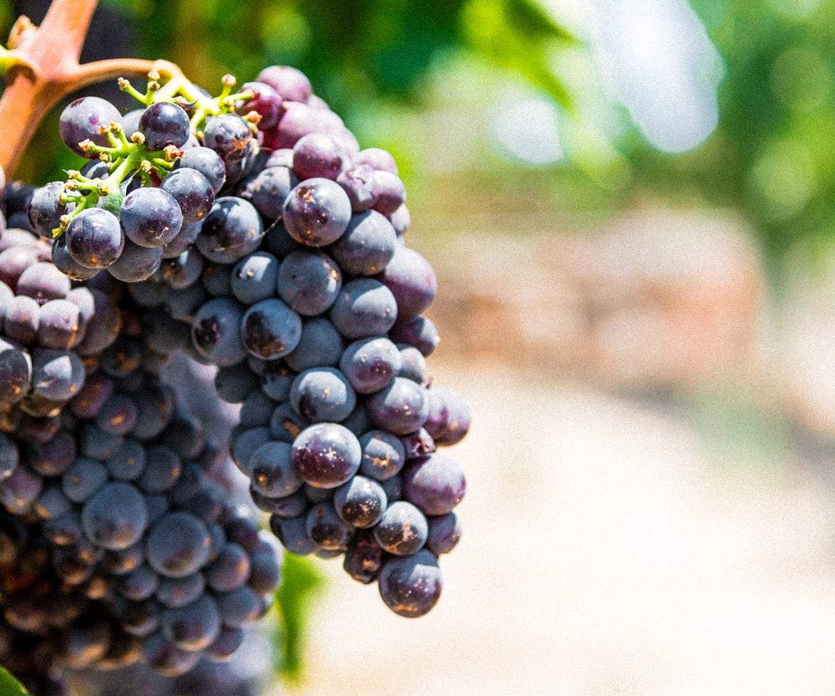 カベルネとは?ワインの王様の歴史や味わいを徹底解説!|theDANN media