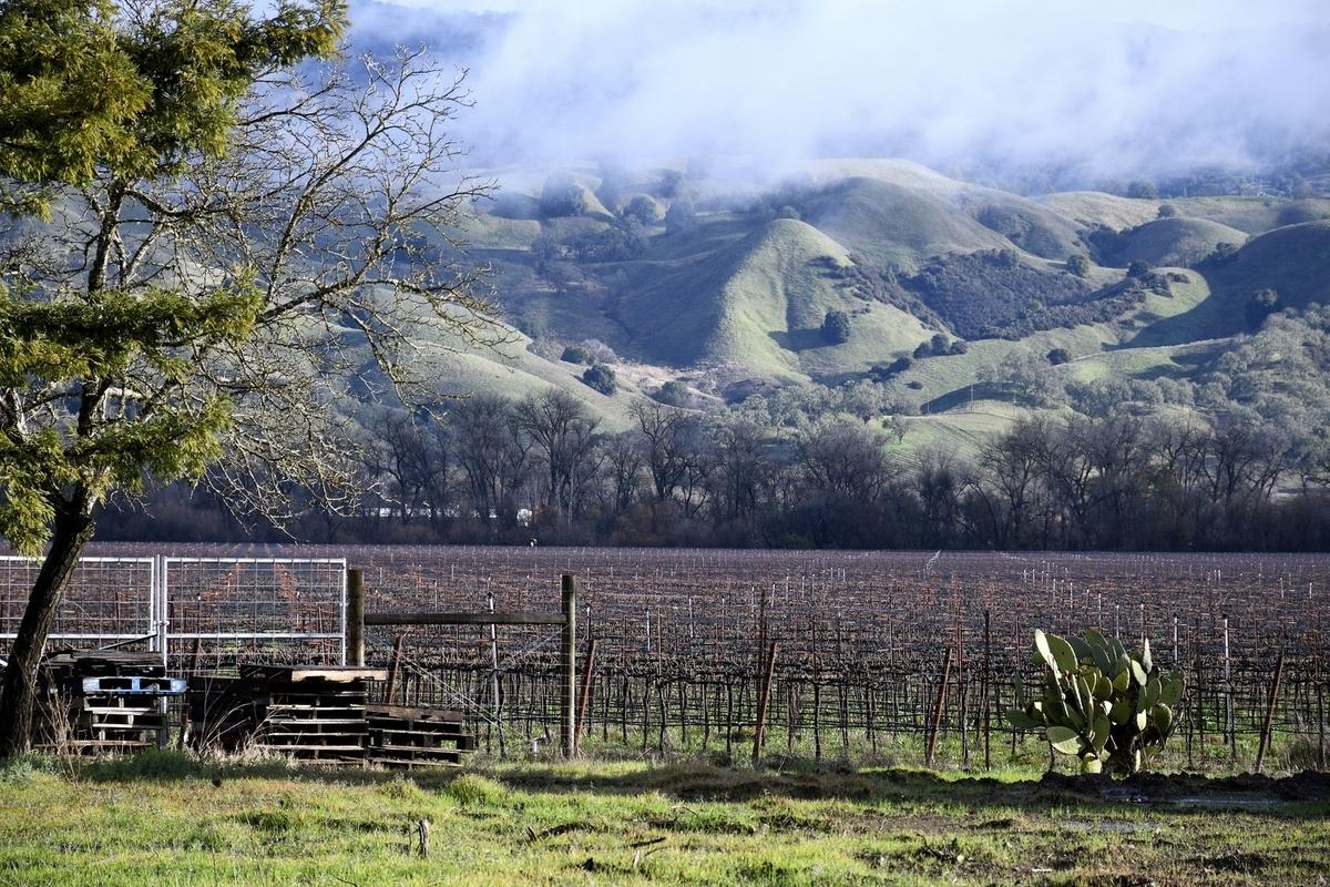 チリワインの産地|theDANN media